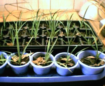seedlings.jpg